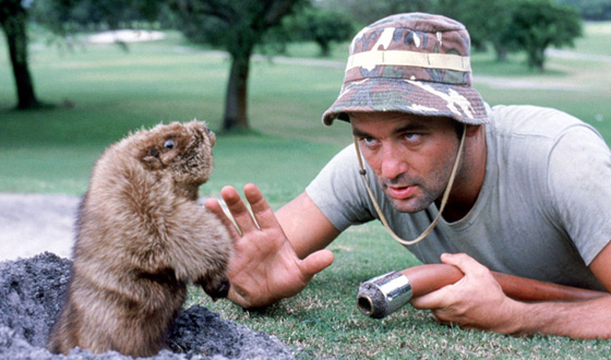 "Shades of ""Caddyshack?"" Dog Gets Punk'd By Gopher"
