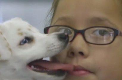deaf girl deaf dog 2
