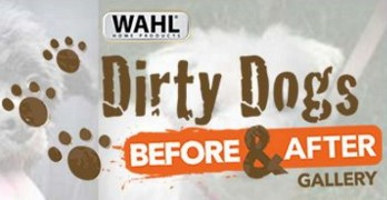 Dirty Dogs Need You to Rock Their Vote