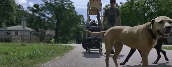 homeless man feeds dogs