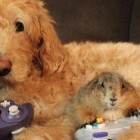 Adorable Prairie Dogs Have a Labradoodle BFF!