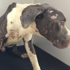 30 Badly Neglected Dogs Rescued in Riverside County, CA
