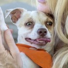 Bubba had four months of drug treatment  and was adopted on Wednesday. Photo: Mark Rightmire, OC Register