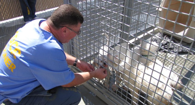 Deaf Dogs Evac'd From California Wildfires Find Temp Home in Prison