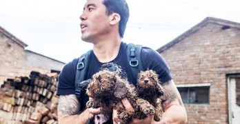Angel of Yulin: American Activist Saves 1,000 Dogs from Chinese Festival