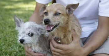 Reunited!  Texas Terrier Missing Since 2009 Finds His Way Home