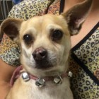 Owner Arrested After Pup Tests Positive for Meth