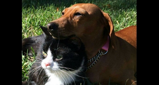 Sad Update: Ruth Passes, Idgie Heartbroken Over Loss of Best Friend