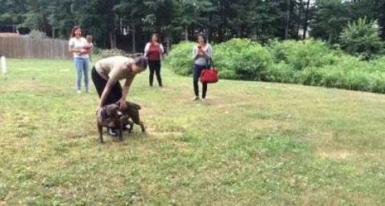 PUPDATE! Sailor Reunites With Dog, Pit Bull Overjoyed