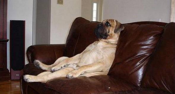 1133-dog-watching-tv1