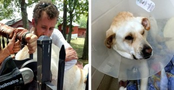 Firefighters Rush to Rescue Dog Who Impaled Himself on a Fence