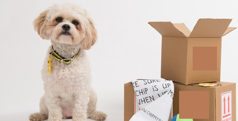 Some Great Tips for Making Moving to a New Home with Your Dog Easier