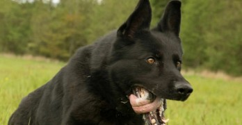 Police Dog Locates Elderly Woman Missing in Wilderness for Four Days