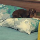 Pepper Has the CUTEST Bedtime Ritual