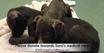 Two Pups Left to Die in a Crate in Someone's Backyard Make an Amazing Transformation!