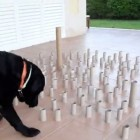 Doggy Dreams of Toilet Tissue Tubes Comes True!