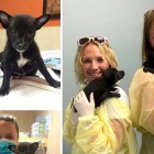 UPDATE:  Parvo Puppies Have Been Adopted!