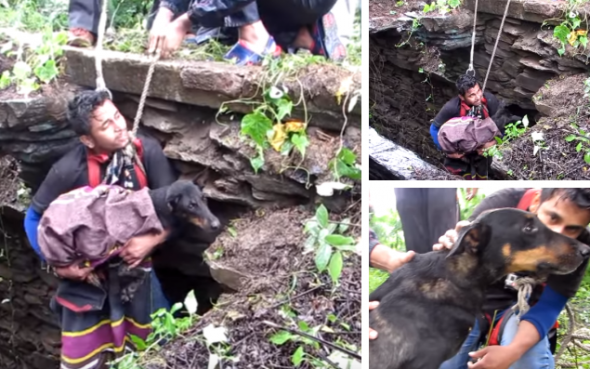 8.12.16 - dog rescued from well in india