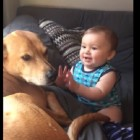 Baby Has Cutest Reaction to Getting Doggy Kisses