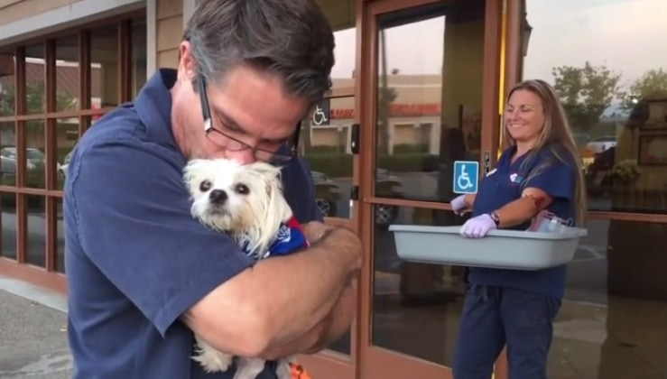 Dog Run Over and Left for Dead Makes Miraculous Recovery