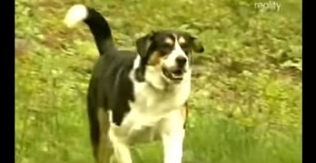 Dog Almost Surrendered for Being Too Big Saves Family from Certain Death in a Fire