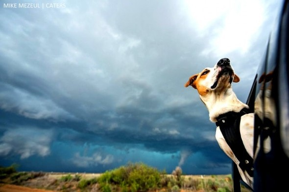 8.17.16 - Rescue Dog Is Living Her Dreams as a Storm Chaser1