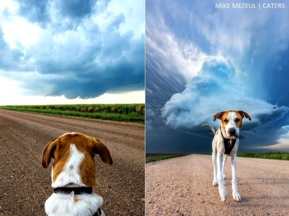 8.17.16 - Rescue Dog Is Living Her Dreams as a Storm Chaser3