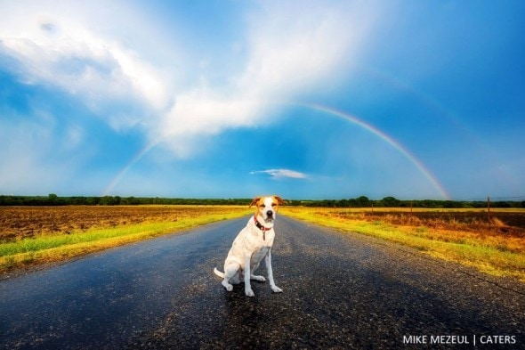 8.17.16 - Rescue Dog Is Living Her Dreams as a Storm Chaser4