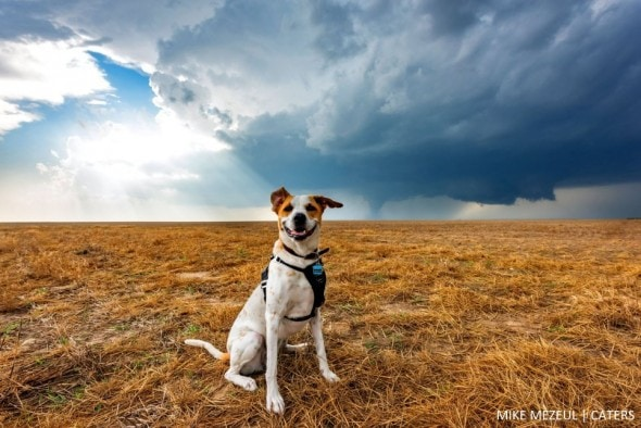 8.17.16 - Rescue Dog Is Living Her Dreams as a Storm Chaser6