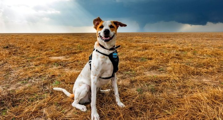 Rescue Dog Is Living Her Dreams as a Storm Chaser