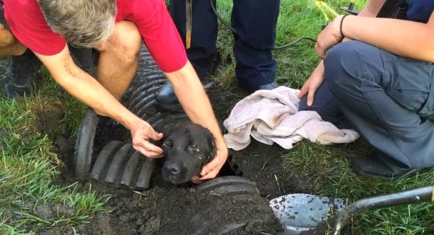 Missing Dog Found After Spending a WEEK Underground