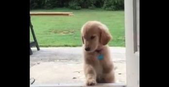 Three-Legged Puppy FINALLY Makes it Over Back Steps for the First Time