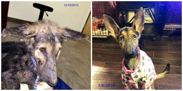 8.18.16 - The Recovery of Frannie5
