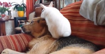 Little White Rabbit Loves His Doggy Sibling So Much They're Inseparable