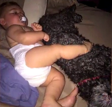 8.19.16 - Heroic Family Dog Sacrifices His Life to Save the Baby's in Deadly House Fire2