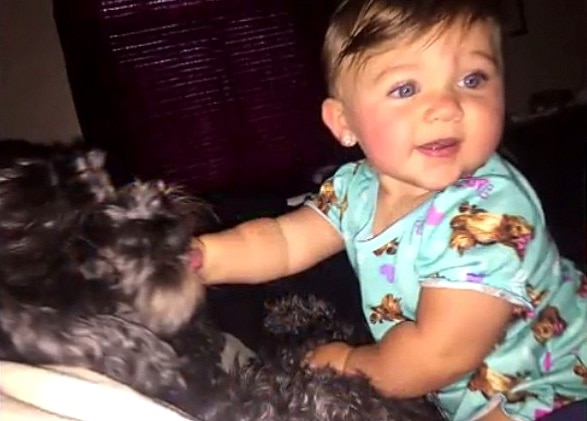 8.19.16 - Heroic Family Dog Sacrifices His Life to Save the Baby's in Deadly House Fire4