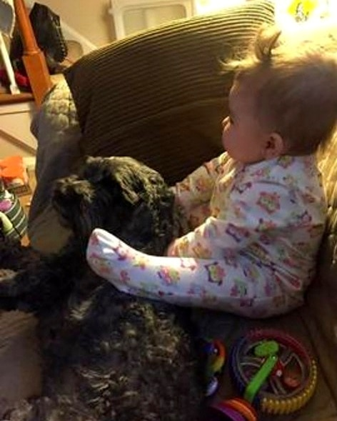8.19.16 - Heroic Family Dog Sacrifices His Life to Save the Baby's in Deadly House Fire6