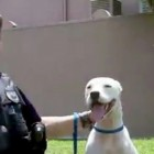 Police Officer Adopts Dog After Hit-and-Run and Pays for Surgery to Save His Leg