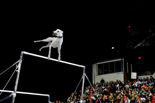 8.19.16 - Olympics9