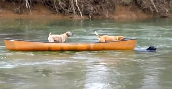 Incredible Dog Heroically Rescues Two Other Dogs in a Runaway Canoe