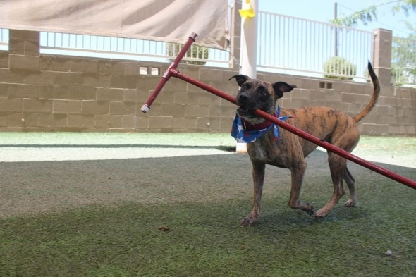 Shelter Worker Makes Pledge To Live In Kennel With Dog