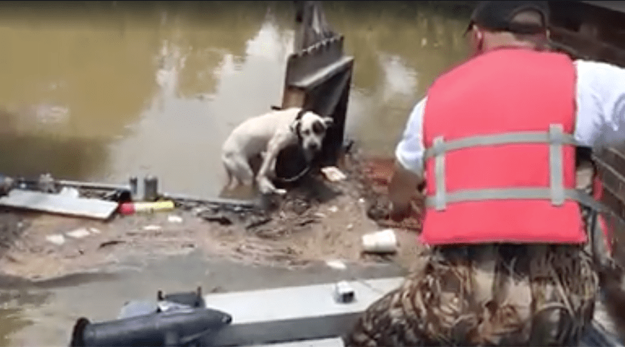 Dog Stuck Clinging to a Broken Fence Rescued from Louisiana Flood