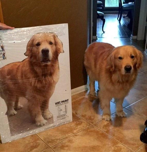 8.22.16 - Cardboard Dog1