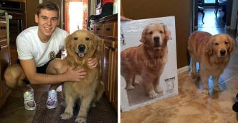 Mom Gets Cardboard Cut-Out of Dog So Son Won't Miss Him While He's Away at College