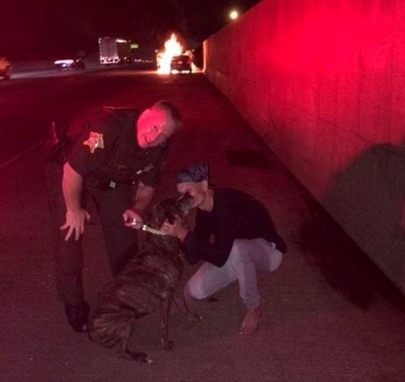 8.22.16 - Sheriff's Deputy Saves Dog in Burning Car1