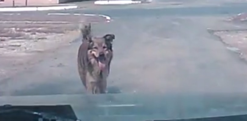 Stupid Human Ignores Dog's Warning and Pays a Heavy Price