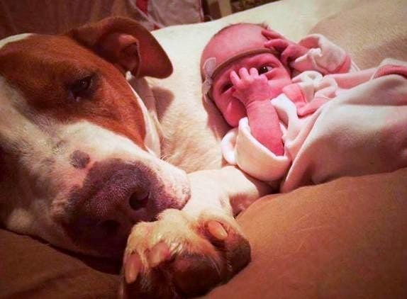 8.23.16 - Rescue Dog in Love With His Baby Sister1