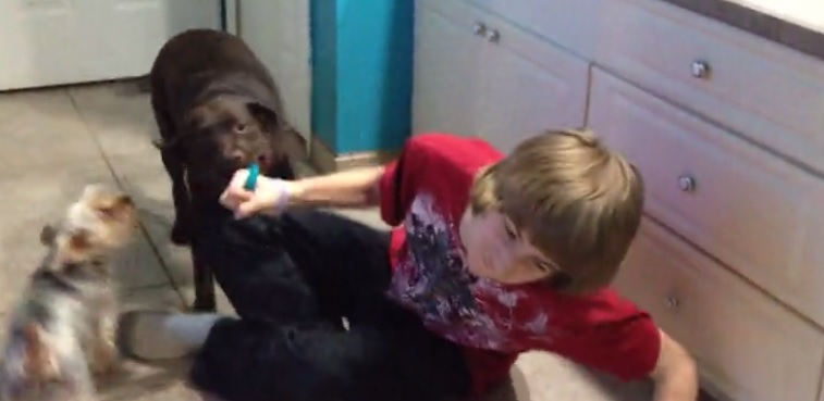This Dog Takes His Tug-of-War Games VERY Seriously!