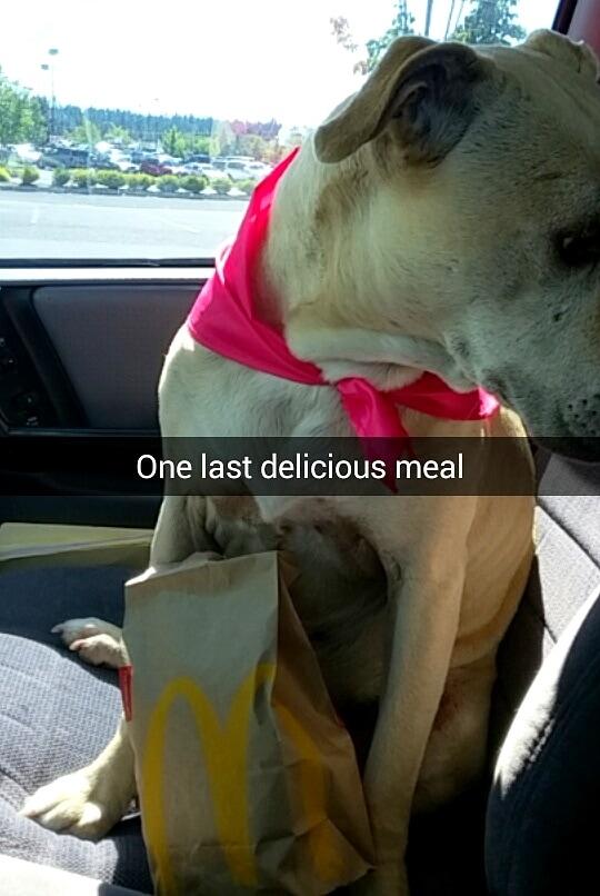 8.29.16 - Snapchat of Last Day10