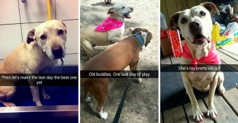 Woman Snapchats Her Cherished Dog's Last Day in a Heartfelt Tribute